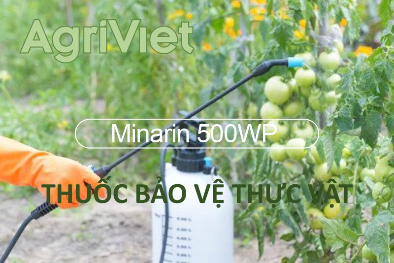 Minarin 500wp Thuốc Trừ Cỏ Agriviet Org
